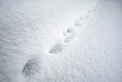 Pistas de Aminal en nieve Fotos de archivo