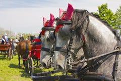 Pistas de caballo Foto de archivo