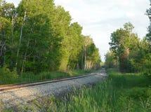 Pistas de ferrocarril alineadas con los árboles de abedul Imagen de archivo libre de regalías