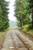 pistas de ferrocarril onduladas en día de verano mojado en bosque Imagen de archivo libre de regalías