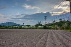 Pistas de granja de la mandioca Fotos de archivo