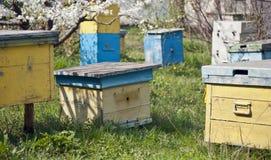 Pistas de la abeja Imagen de archivo