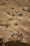 Pistas de la nutria (lutra del Lutra) por el río Avon imagen de archivo