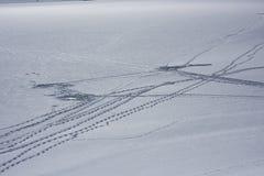 Pistas de la pesca del hielo Fotografía de archivo libre de regalías