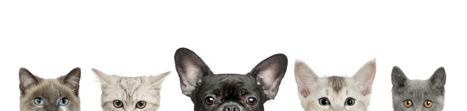 Pistas de la pista y del gato de perro Imágenes de archivo libres de regalías