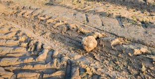 Pistas de la rueda del tractor en tierra de la arcilla Foto de archivo libre de regalías