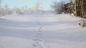 Pistas de las liebres en la nieve almacen de video