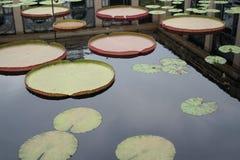 Pistas de lirio dentro de una plaza Imagen de archivo
