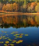 Pistas de lirio en el lago Fotos de archivo libres de regalías