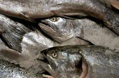 Pistas de los pescados imagenes de archivo