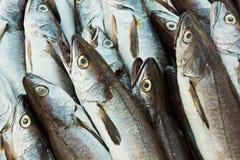 Pistas de los pescados de bacalao Fotos de archivo libres de regalías