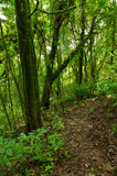 Pistas de senderismo en el primitivo de bosque fotos de archivo libres de regalías