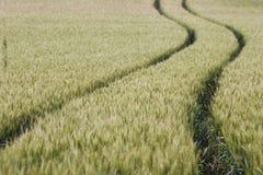 Pistas del campo de trigo Fotos de archivo libres de regalías