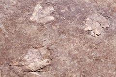 Pistas del dinosaurio Fotografía de archivo