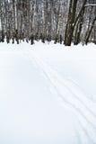Pistas del esquí al borde del bosque del abedul Fotografía de archivo
