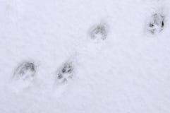 Pistas del gato en la nieve Imagen de archivo libre de regalías