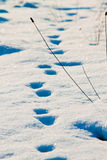 Pistas del invierno Fotografía de archivo