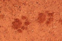 Pistas del león en la arena Imagen de archivo