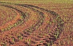 Pistas del neumático del campo de grano Imagenes de archivo