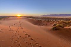 Pistas del Oryx a la puesta del sol fotografía de archivo libre de regalías