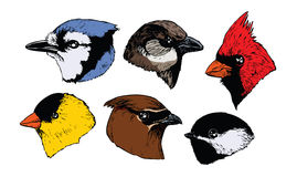 Pistas del pájaro ilustración del vector
