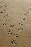 Pistas del pájaro en la orilla foto de archivo libre de regalías