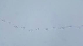 Pistas del pájaro en nieve fotografía de archivo