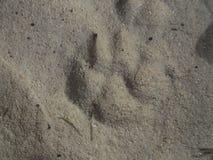 Pistas del perro fotografía de archivo libre de regalías