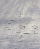 Pistas del ratón en la nieve Imagen de archivo libre de regalías