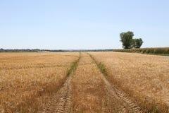 Pistas del remolque del alimentador a través de un campo de trigo Imagen de archivo libre de regalías