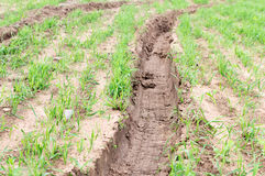 Pistas del tractor en tierra cultivared verde Imágenes de archivo libres de regalías