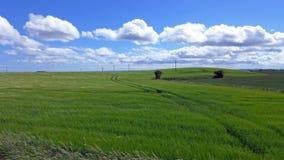Pistas del tractor en un campo verde delicioso con los cielos azules y la gripe Foto de archivo libre de regalías