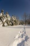 Pistas del zapato de la nieve Fotografía de archivo libre de regalías