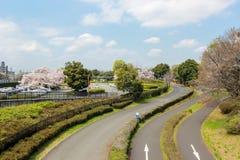 Pistas do pathsbike do ciclismo e árvores de cereja em Showa Kinen KoenShowa Memorial Park, Tachikawa, Tóquio, Japão na mola Imagem de Stock