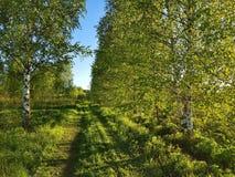 Pistas en el bosque Primavera hermosa del bosque de la primavera fotografía de archivo