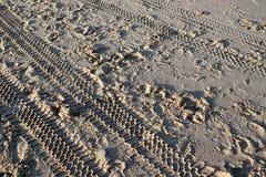 Pistas en la arena en una playa Foto de archivo libre de regalías