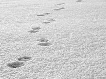 Pistas en la nieve imágenes de archivo libres de regalías