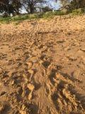 Pistas en la salida del sol, Australia de la tortuga Imágenes de archivo libres de regalías