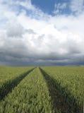 Pistas en un campo de trigo Imagen de archivo libre de regalías