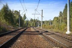 Pistas ferroviarias en la madera en el verano fotografía de archivo libre de regalías