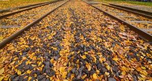 Pistas ferroviarias en otoño imagen de archivo
