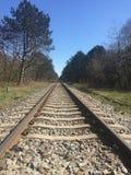 Pistas ferroviarias y ?rboles foto de archivo