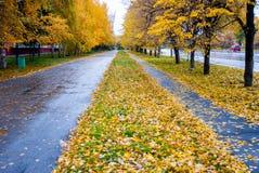 Pistas lluviosas del otoño con las hojas amarillas Fotos de archivo