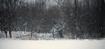 Pistas nevosas simples del neumático - retrato Imágenes de archivo libres de regalías