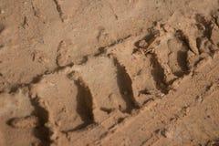 Pistas nudosas del neumático del camino fangoso de la selva del ECU del nivel del suelo Fotografía de archivo