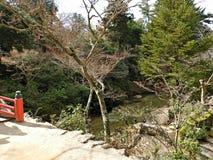 Pistas que caminan en la isla de Miyajima, Hiroshima, Japón fotos de archivo