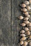 Pistas secadas de la amapola Fotos de archivo