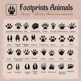 Piste animali - animali nordamericani Fotografia Stock Libera da Diritti