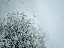 Piste animali nella neve immagini stock