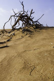 Piste animali in sabbia del deserto Immagine Stock Libera da Diritti